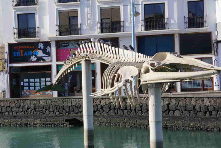 Eines der diversen Walskelette, die es überall auf den Kanarischen Insel von gestrandeten Walen gibt.