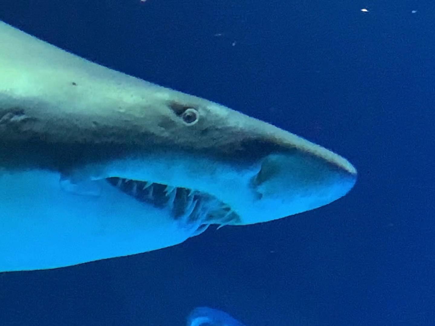 Poema del Mar – Aquarium