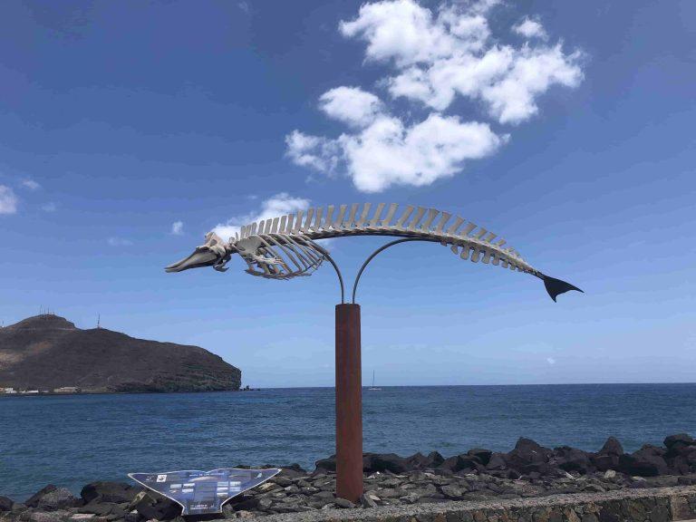 Ein Walskelett, wie es sie auf den meisen Kanarischen Inseln gibt. Es handelt sich um Wale, die irgendwann angeschwemmt worden sind und prepariert wurden.